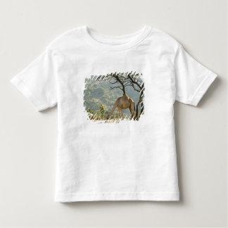 Oman, Dhofar Region, Salalah. Camel in the Toddler T-shirt