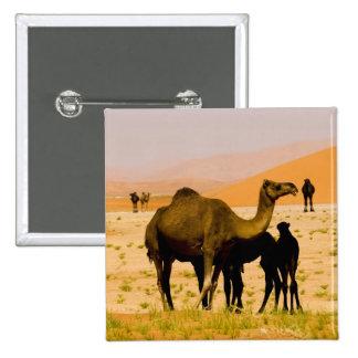 Oman, Rub Al Khali desert, camels (dromedaries), Buttons