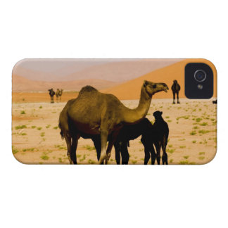 Oman, Rub Al Khali desert, camels (dromedaries), Blackberry Bold Cover