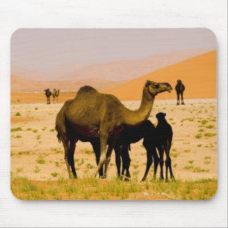 Oman, Rub Al Khali desert, camels (dromedaries), Mouse Pad