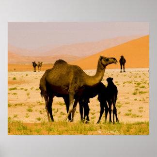 Oman, Rub Al Khali desert, camels (dromedaries), Poster
