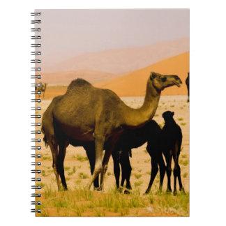 Oman, Rub Al Khali desert, camels (dromedaries), Spiral Notebook