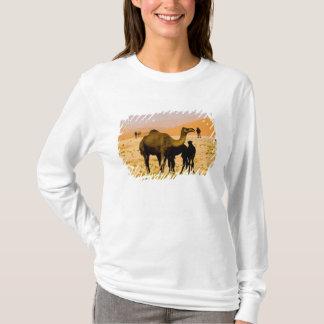 Oman, Rub Al Khali desert, camels (dromedaries), T-Shirt