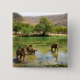 Oman, Wadi darbat, dromedaries pasturing in the Pinback Button