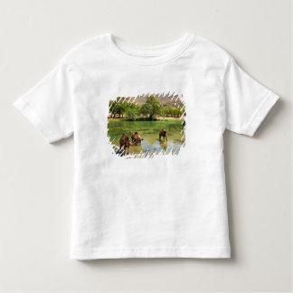 Oman, Wadi darbat, dromedaries pasturing in the T Shirt