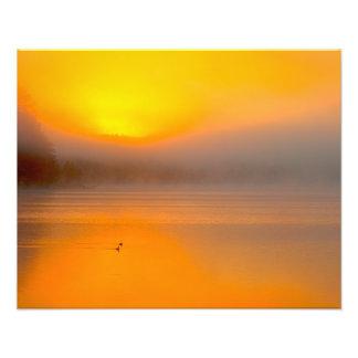 Ombre Sunrise Shining on Two Ducks Nature Photo -
