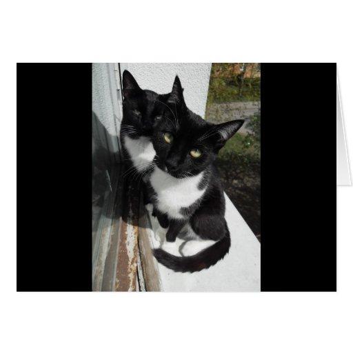 Ominous Cats Greeting Card