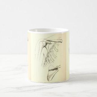 Omóplato de la anatomía el | del vintage (circa taza de café
