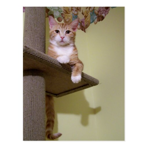 on cat tree post cards