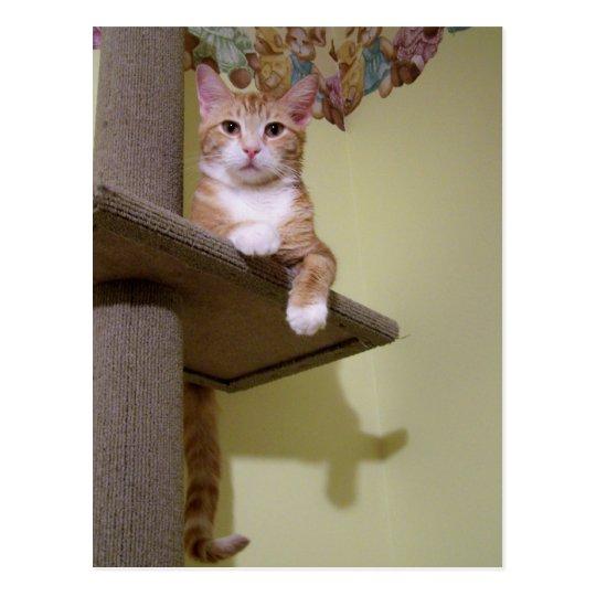 on cat tree postcard
