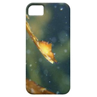 On edge iPhone SE/5/5s case