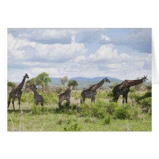 On safari in Mikumi National Park in Tanzania, 2 Card