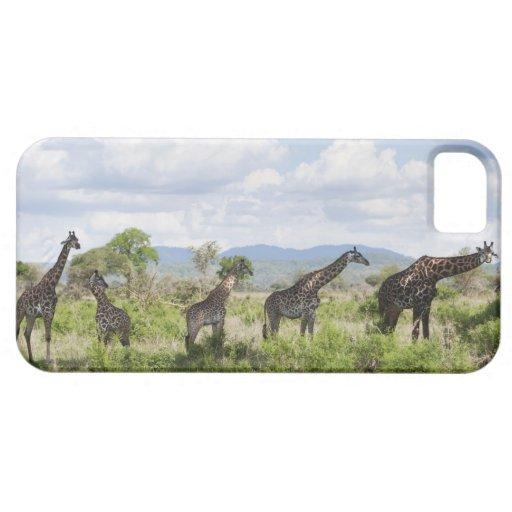 On safari in Mikumi National Park in Tanzania, 2 iPhone 5 Cover