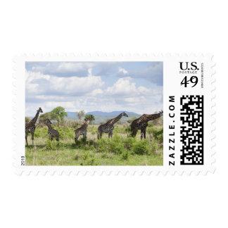 On safari in Mikumi National Park in Tanzania, 2 Postage