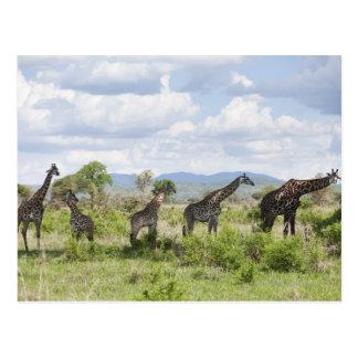 On safari in Mikumi National Park in Tanzania, 2 Postcard