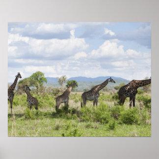 On safari in Mikumi National Park in Tanzania, 2 Poster