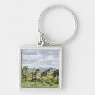 On safari in Mikumi National Park in Tanzania, 2 Silver-Colored Square Keychain
