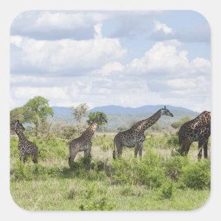 On safari in Mikumi National Park in Tanzania, 2 Square Stickers