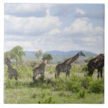 On safari in Mikumi National Park in Tanzania, 2 Tiles