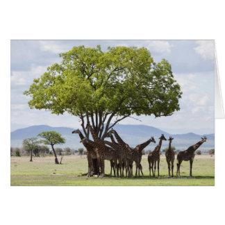 On safari in Mikumi National Park in Tanzania, Card