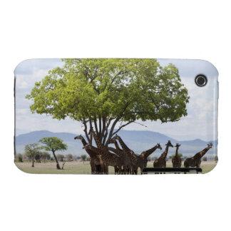 On safari in Mikumi National Park in Tanzania Case-Mate iPhone 3 Cases