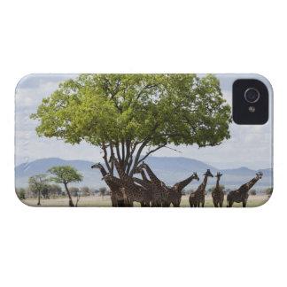 On safari in Mikumi National Park in Tanzania, iPhone 4 Cover