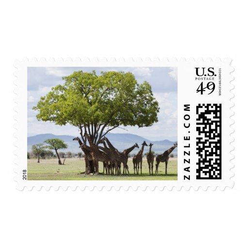 On safari in Mikumi National Park in Tanzania, Stamps
