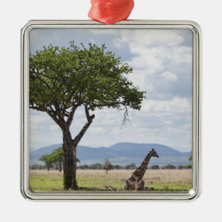 On safari in Mikumi National Park in Tanzania, Square Metal Christmas Ornament