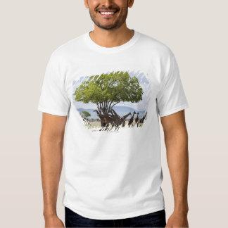 On safari in Mikumi National Park in Tanzania, T Shirt