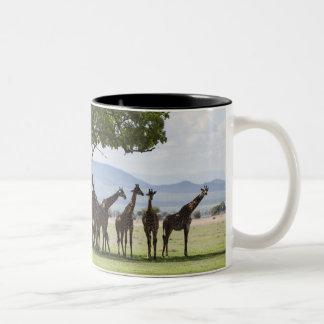 On safari in Mikumi National Park in Tanzania, Two-Tone Coffee Mug