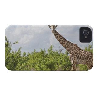 On safari in Tanzania, Africa. 2 iPhone 4 Case-Mate Case