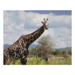 On safari in Tanzania, Africa. Print