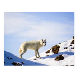 on snow covered terrain postcard