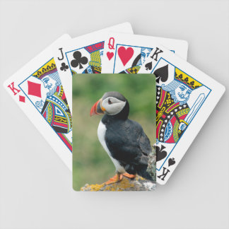 On the Edge Puffin Bicycle Playing Cards