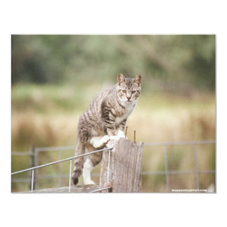 """On The Fence Feral Tabby Cat Invitations 4.25"""" X 5.5"""" Invitation Card"""