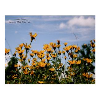 On the Prairie, Missouri Prairie Postcard