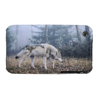 On the Prowl iPhone 3 Cover