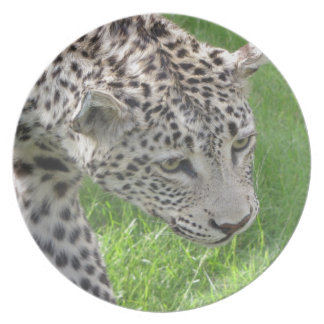 On the Prowl Melamine Plate