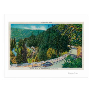 On the Road to Big Trees from Santa Cruz Postcards