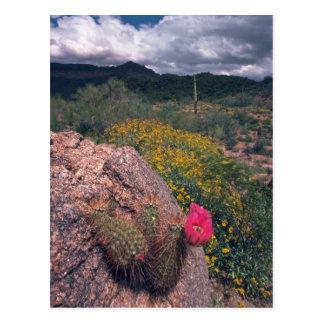 On The Rocks Postcard