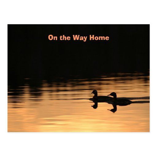 On the Way Home Postcard