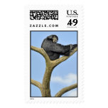 On Top of the World Gibbon Postage Stamp