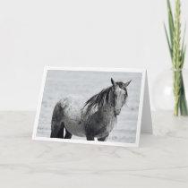 "Onaqui Mountain Wild Horse blank note card. 5""x 7"" Card"