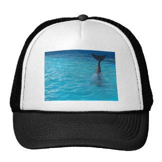 Onda feliz de la cola del wholphin gorras