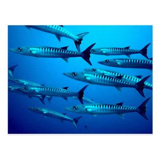 onda tropical del agua del océano del mar profundo postales