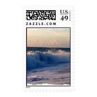Ondas de fractura decididas en una playa de la sellos
