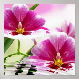 Ondulación de Orchide Poster