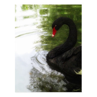 Ondulaciones de la charca del cisne negro 1 tarjetas postales