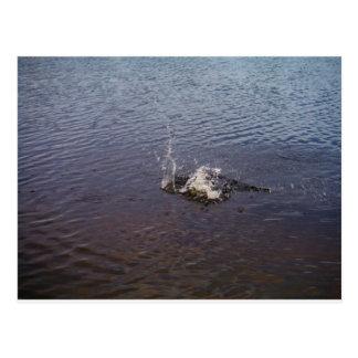 Ondulaciones en un lago, de un salto de los postales
