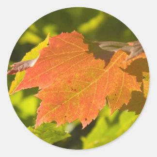 One Autumn Leaf Classic Round Sticker
